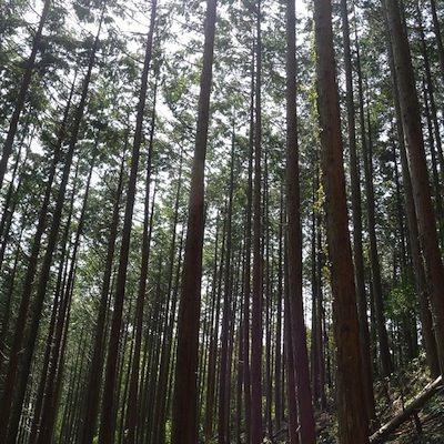 香り高い高級木材「ヒノキ」でDIYしてみよう